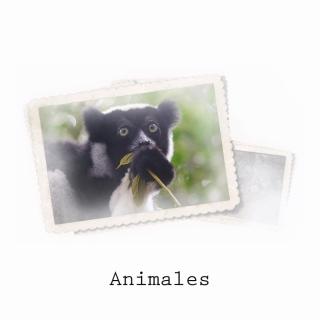 topics ANIMALES